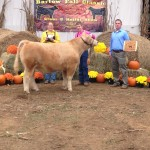 Reserve Champion Steer- Bartow Fall Classic