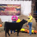 Division Champ Maine Heifer- Bartow Fall Classic